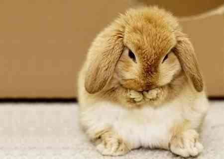 Claves para tener un conejo como mascota mascotalia - Perros para tener en casa ...
