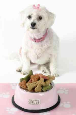 perros: como se alimentan los perros