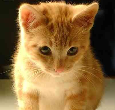 C mo ense arle modales a tu gato mascotalia for Como ahuyentar gatos del jardin
