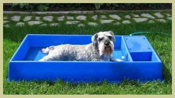 Una piscina para tu perro mascotalia for Piscina para perros