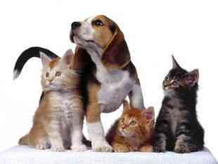 Frases Relacionadas Con Mascotas Mascotalia