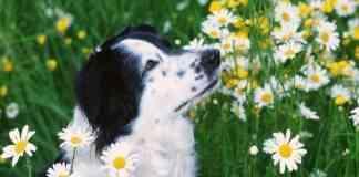 Perros - los peligros del jardín