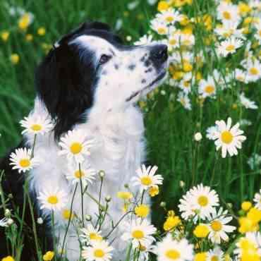 Perros: Los peligros del jardín