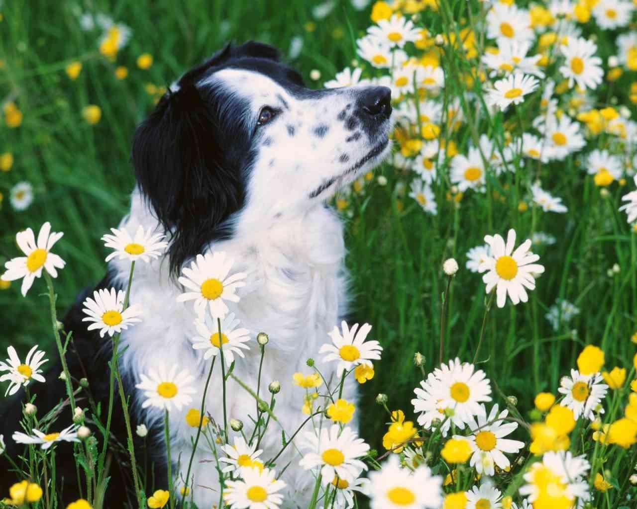 Perros los peligros del jard n mascotalia - Jardin para perros ...