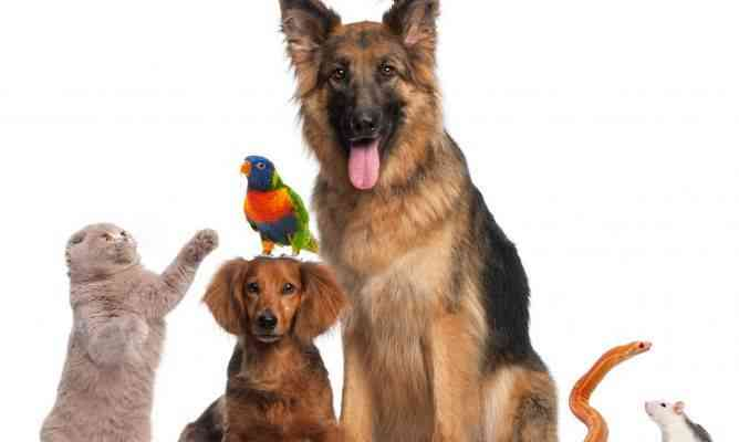 mascotas compania de animales