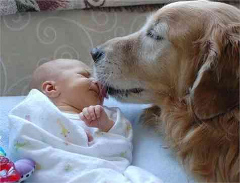 consejos mascota bebe