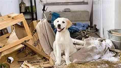 sintomas ansiedad perro(1)