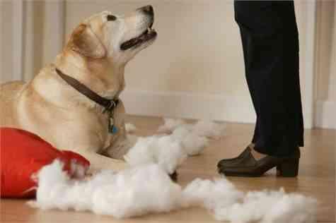 limpieza casa perro