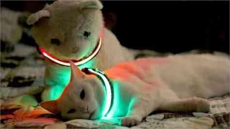 Collar LED mascotas