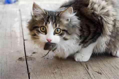 gatos curiosidades