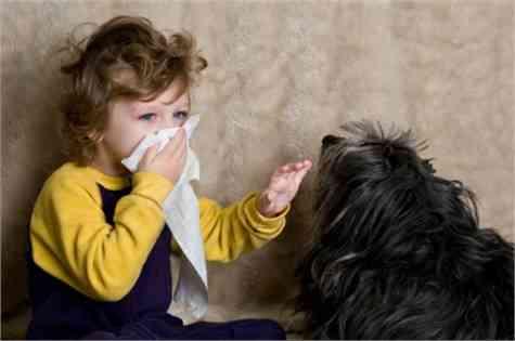Gatos alergia