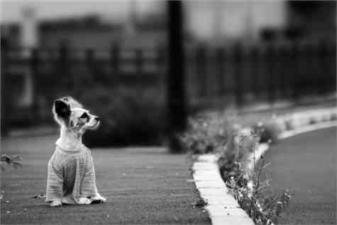 adoptar mascota