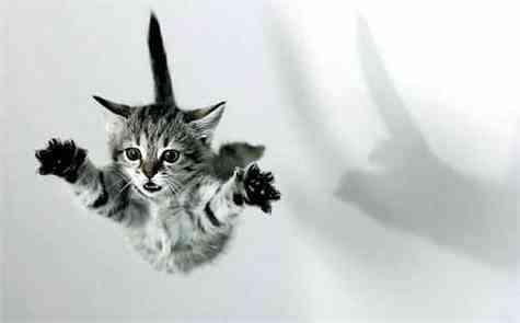 Gato cae parado
