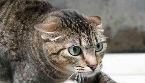 Calmar gato