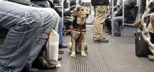 Mascotas transporte publico