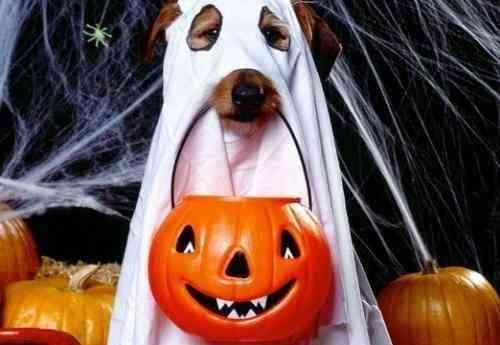 Proteger mascotas fiestas
