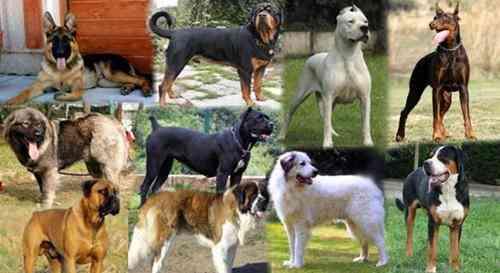 Perros guardianes