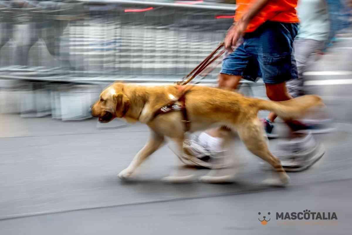perro guia perro asistencia a ciegos