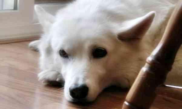 Ansiedad perros