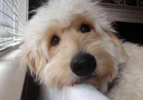 Cortes cabello mascotas 1