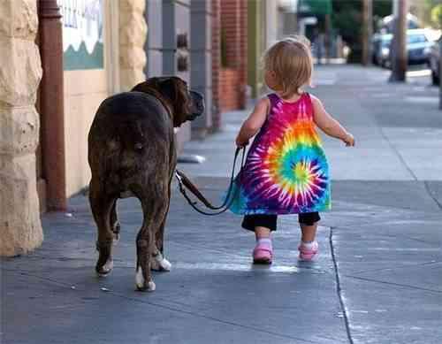 Caminar perro