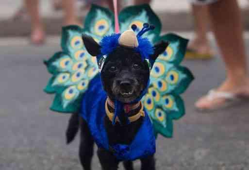 Carnaval Brasil mascotas