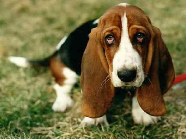 Culpa perros