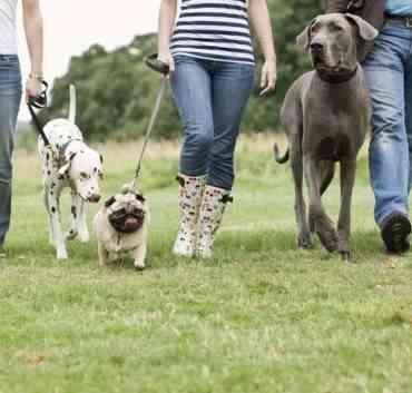 Consejos a la hora de pasear a tu perro
