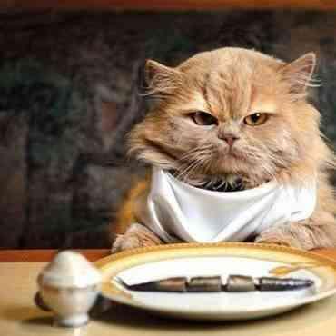 ¿Cómo evitar la obesidad en mi gato?