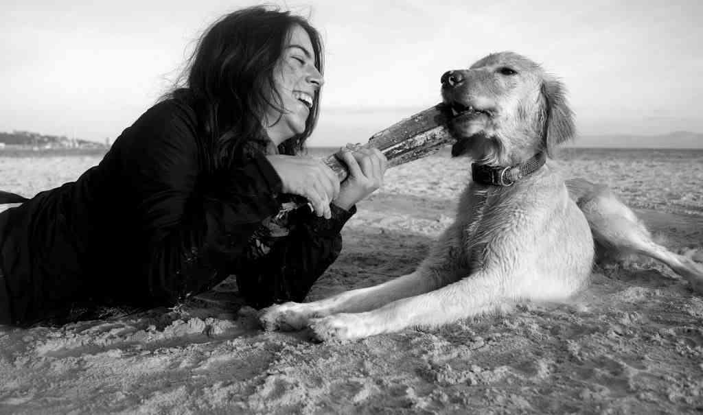 Adiestramiento perro