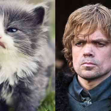 Cat of Thrones, la parodia de Game of Thrones con gatos