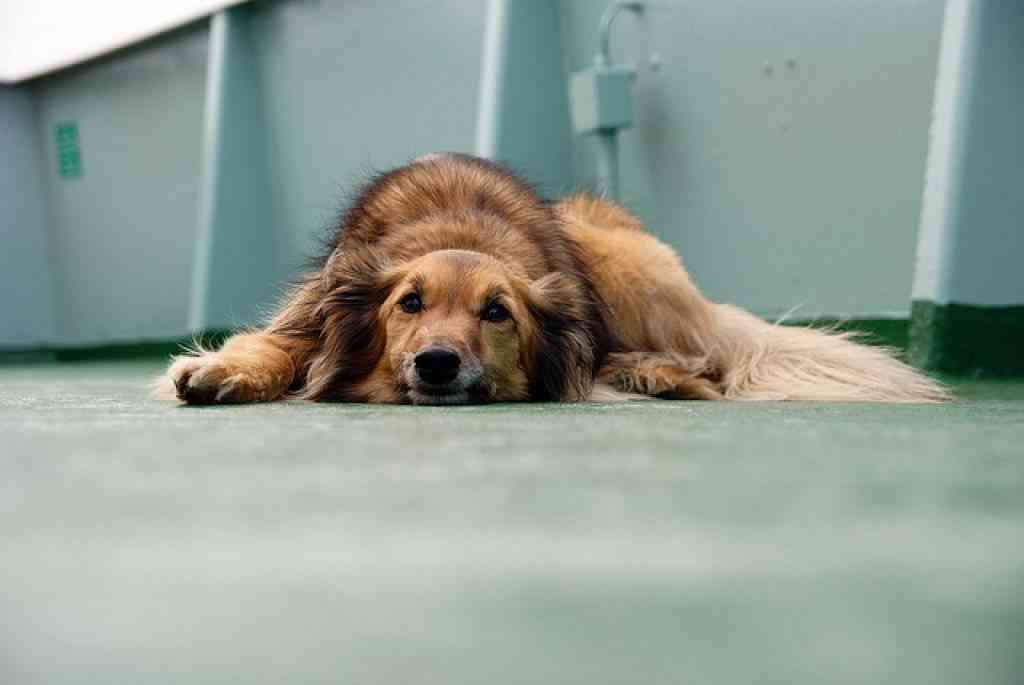 Enfermedades humanos mascotas