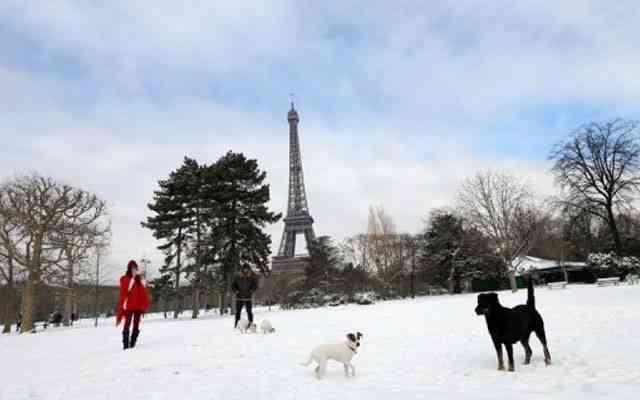 Francia perros