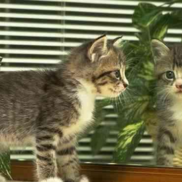 ¿Por qué los gatos se pelean con su reflejo?