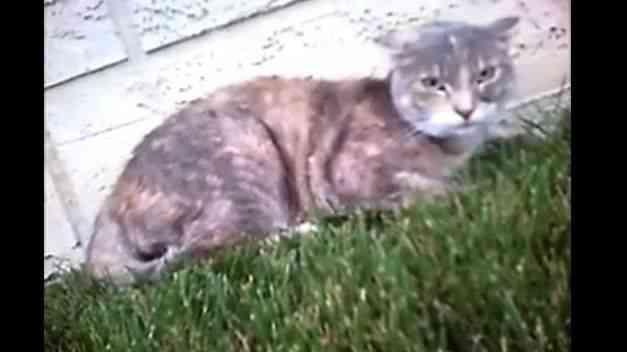 Pelea gatos primera persona