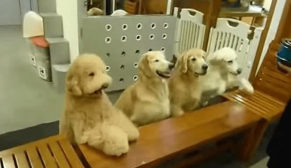 Perros rezan