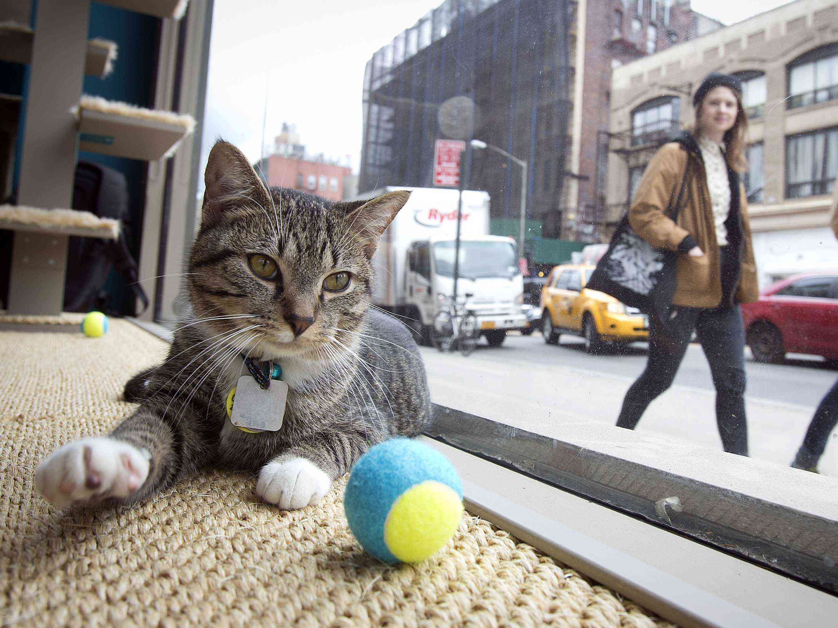 Cat Café Nueva York