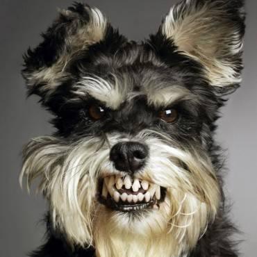 Mi perro tiene mal humor: ¿cómo se lo quito?