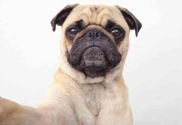 Selfies perros 1
