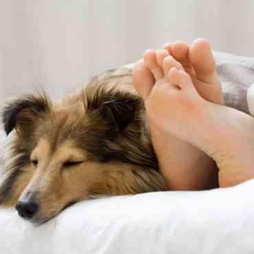 Dormir con nuestro perro en la cama nos perjudica