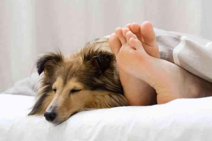 Dormir perros cama