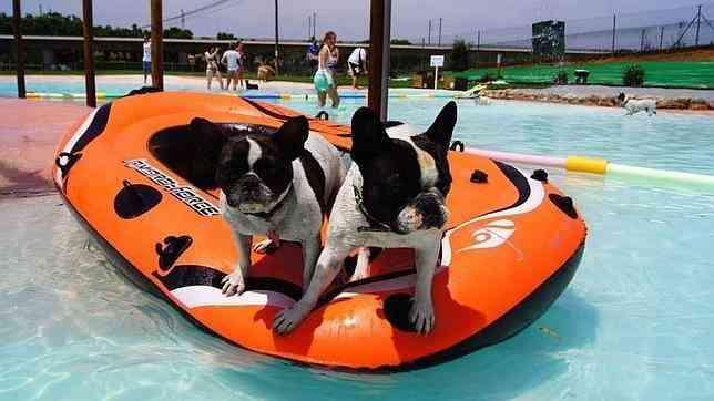 Puppy-Resort