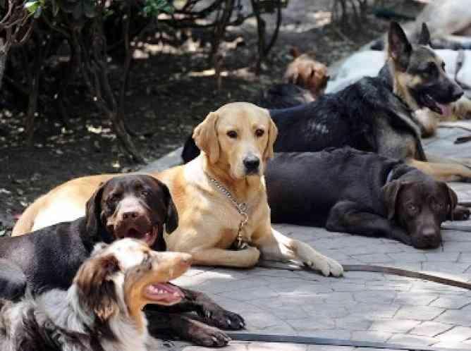 españa-abandono-mascotas