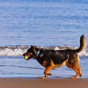 Playas para llevar a tu perro de vacaciones