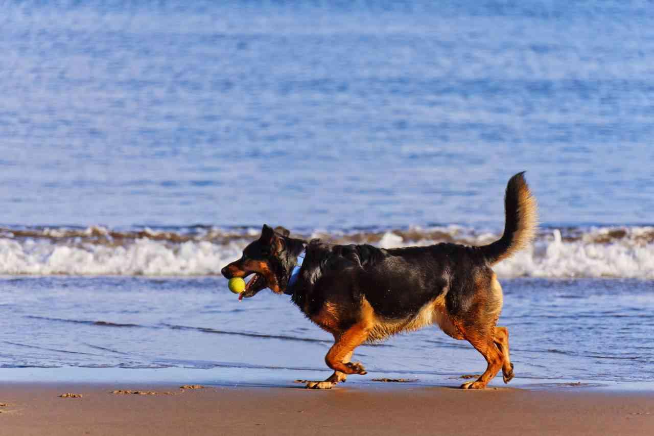 perros-vacaciones