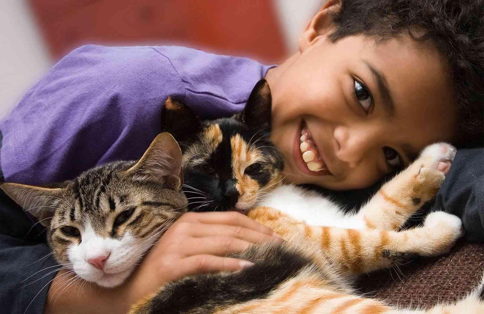 razas-gatos-niños