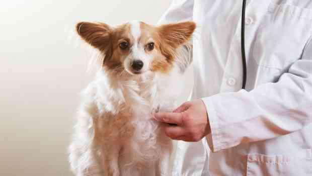 seguro-de-mascotas