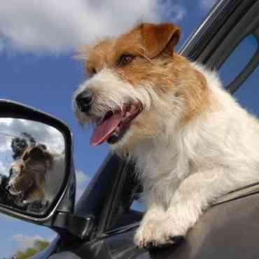 Viajar con perros: consejos para el verano