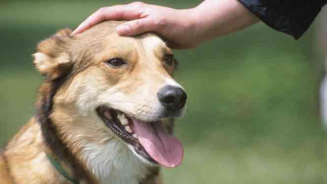 adiestrar-perro