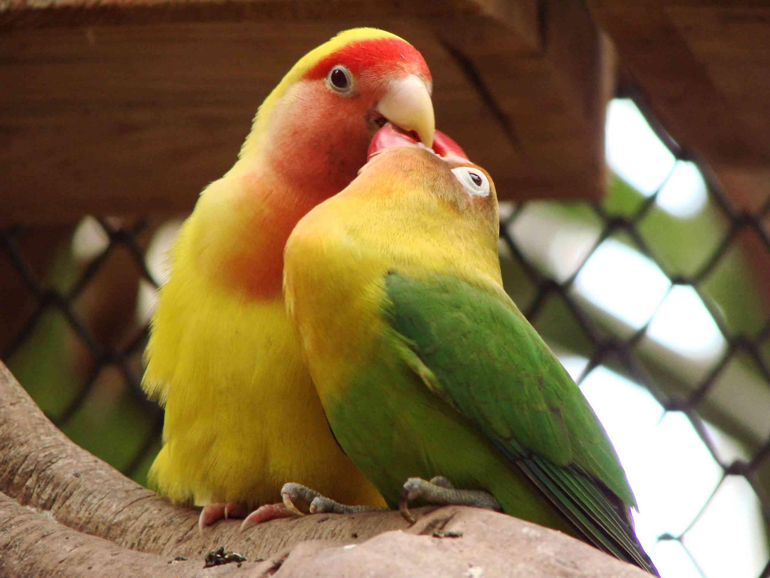 cuidados básicos pájaros